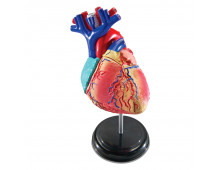 Buy Õppekomplekt LEARNING RESOURCES Anatomy Model - Heart LER3332 Elkor